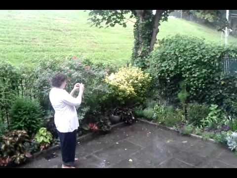 Valeries garden, before the storm