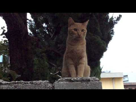A cat documentary No.4 being shot with two takes (infinite hope 失われない希望)