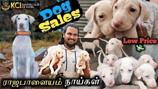 காசு முக்கியம் இல்லை / Rajapalayam Puppies /Dogs for sale /Cheapest Price /Puppies Available / MCT