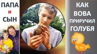 Как Вова вырастил и приручил голубя #Dove. Животные в США. Папа и Сын. Алексей и Вова Савченко.
