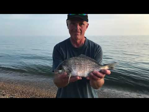 Fishing Chesil Beach. Chesil Delivers The Goods....Plus Mackerel Mayhem! Episode 8 August 2019