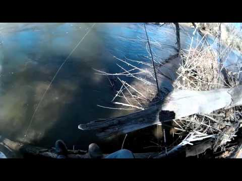 (Trout) Albuquerque Drain Fishing