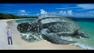 ТОП 10 Самых БОЛЬШИХ черепах