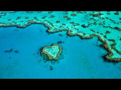 'Very poor' outlook for Great Barrier Reef: report