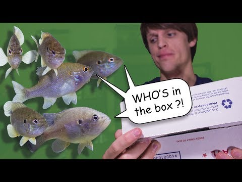 Unboxing Some More North American NATIVE FISH!