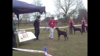 North Of England Dobermann Club Open Show April 2013 Dog Challenge