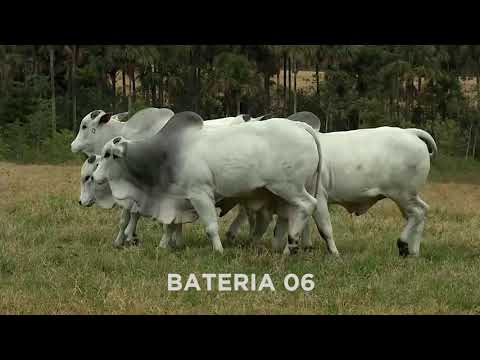 BATERIA 06