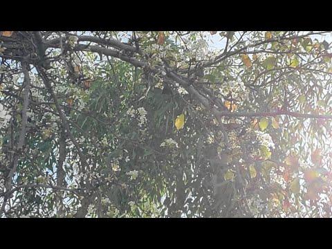 Цветение В Январе В Сан-диего