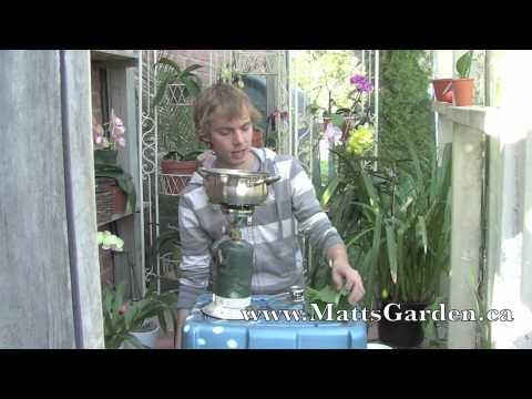Rhubarb Pesticide