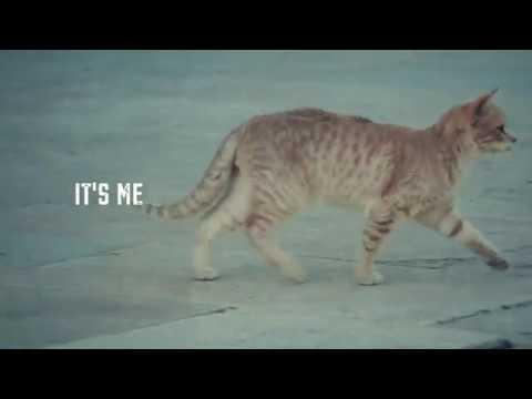 Cats of Jerusalem -- MEOW!