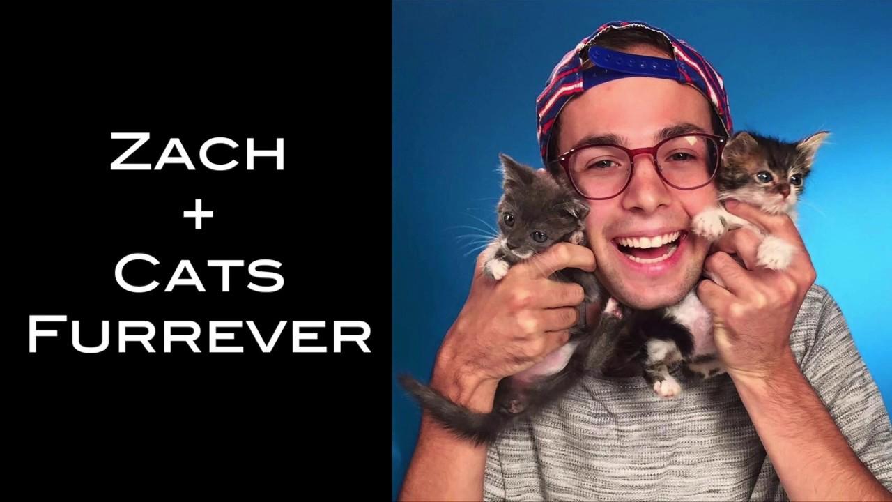 Zach + Cats Furrever