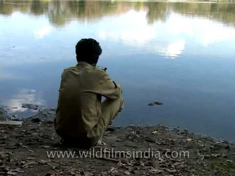Forty pounds of gold - landing a 40 pound Mahseer fish in India