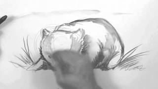 Speed Video, Wombat Drawing