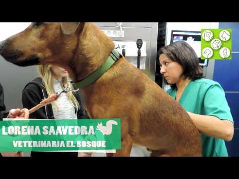clinica-veterinaria-madrid.-lorena-saavedra.-emergencias-veterinarias