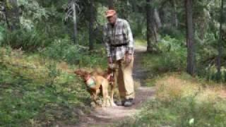 Utah/idaho Vizsla Rescue Retreat - Wade Lake