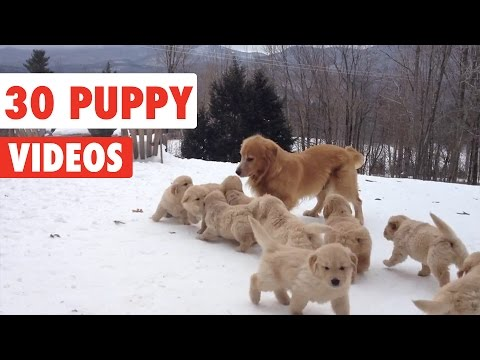 30 Puppy Videos Compilation 2016