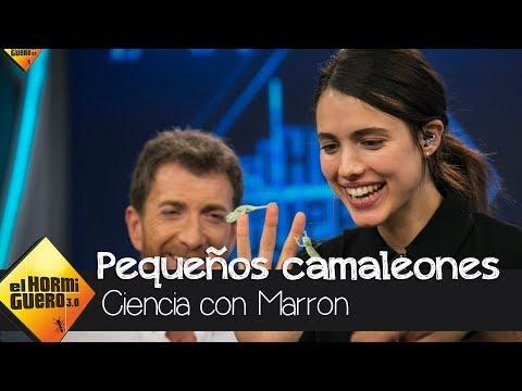 Marron conquista a Margaret Qualley con camaleones bebé - El Hormiguero 3.0