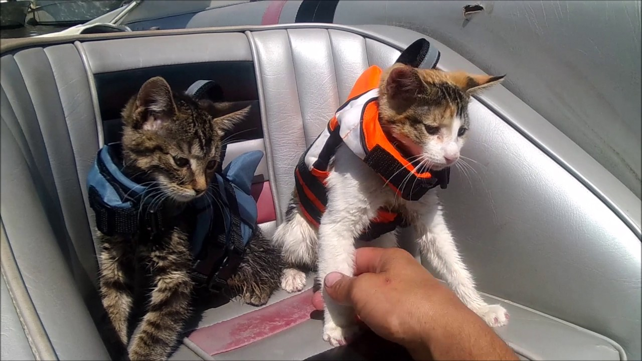 Kittens/Cats In LIFE JACKETS On a Boat Adventure! - YouTube