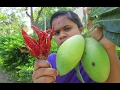 Fresh MANGO With RED CHILLI Recipe | VILLAGE STYLE FOOD