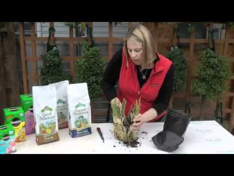 Townsquare Media Presents: Gardening Tips with Chanda Gebhartdt.