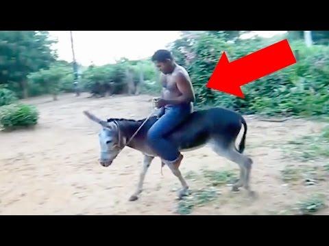 Videos Engraçados e Cassetadas de Montaria : Burro Cavalo e Boi