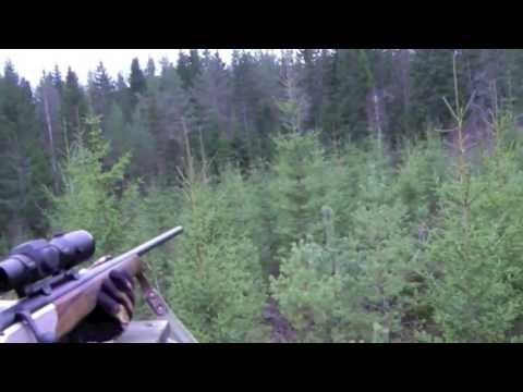 MOOSE HUNT WITH AIMPOINT IN SWEDEN