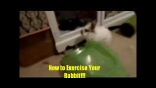 Ways to Exercise Your Rabbit