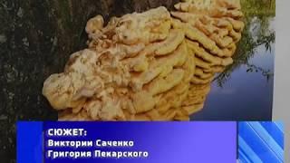 2017-11-16 г. Брест. Выставка «Лесные невидимки». Новости на Буг-ТВ. #бугтв