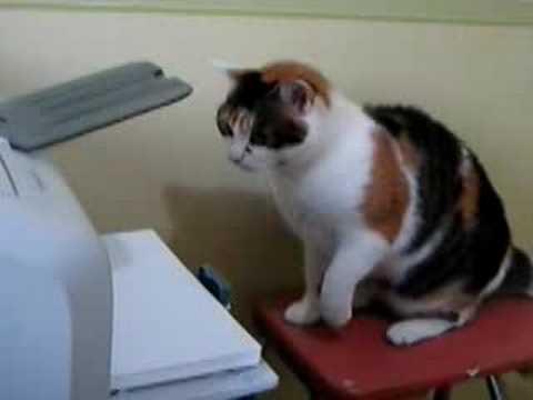 Pussy versus Printer