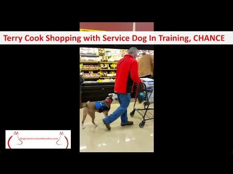 Chance and Columbus Ohio Dog Trainer Terry Cook: Public Access Training