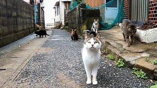 漁港の街の路地裏を歩くと猫がたくさん集まってきて楽しい