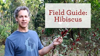 Hibiscus (Roselle) | Cooling Herb for Natural Beauty