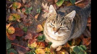 Поругалась с мужем, говорю кота забираю и ухожу, но не тут то было