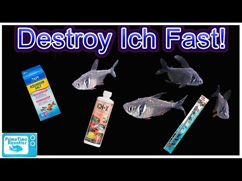 How To Treat ICH In Fish And Clear Infection FAST! Complete Guide From A Microbiology Perspective