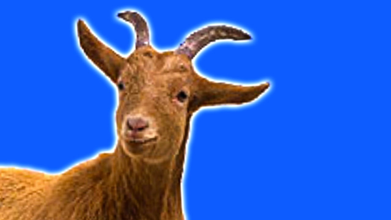 R Goats goats - YouTube...