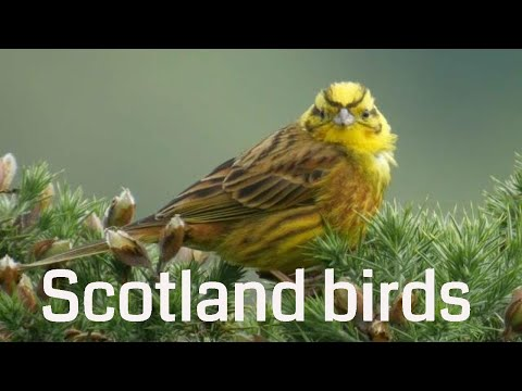 Birds and Nature in North Scotland-Footage