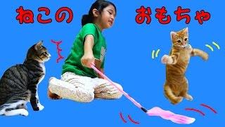 我が家の子猫☆ルイ君とくるみちゃんと遊ぼう!いろんな猫のおもちゃ♪himawari-CH thumbnail
