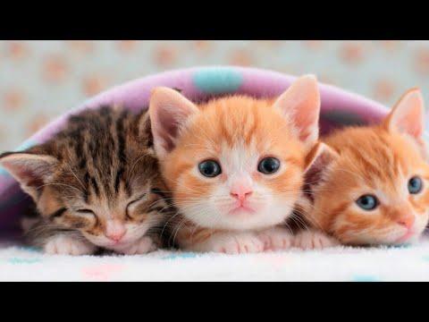 Resultado de imagen para Gatos domesticos