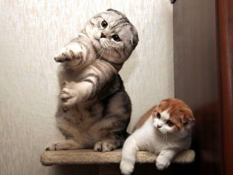 Cats dancing to music   humorous cat dance compilation