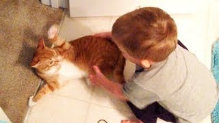 Marmalade's First Toddler Encounter!