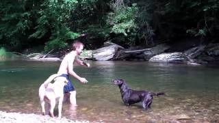 Swimming With Labs!