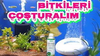 PLANTED AQUARIUM SETUP, ichlid birth,Cichlid Aquarium,cichlid fish,cichlid aquarium