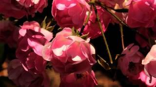 русская музыка для души слушать онлайн бесплатно...(Девочка нереально поет, тембр крутой!, 2015-02-03T14:29:18.000Z)