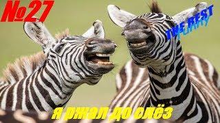 Очень смешные испуги людей и животных 2020   Юмор   Розыгрыши   Пранки