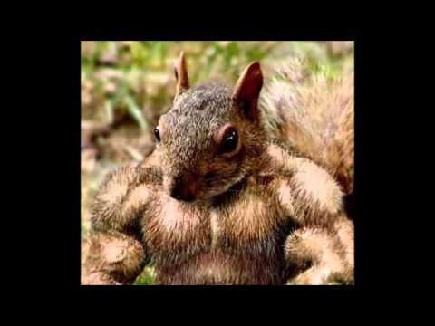 Buff Rabid Squirrel vocal take 3 - YouTube