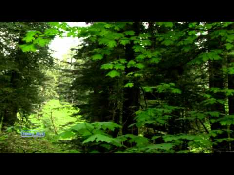Bill Douglas  Forest Hymn Relaxing Music
