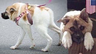 Czasem pół psa to wszystko czego potrzebujesz!