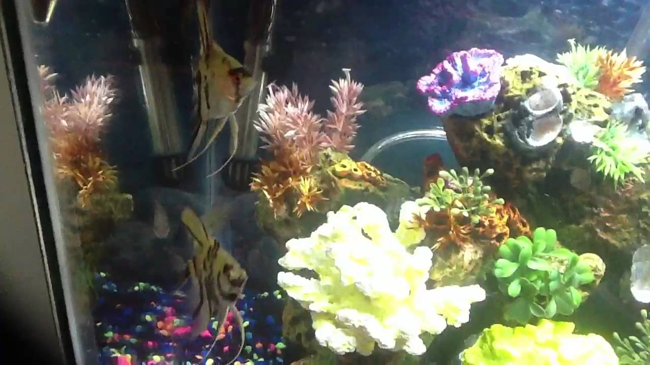 My awesome 20 gallon freshwater aquarium fish tank   YouTube