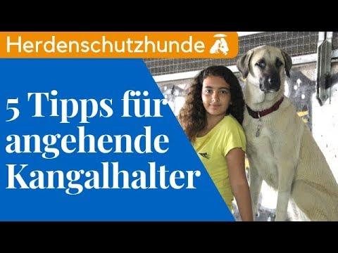 5 Tipps für angehende Kangalhalter / Mia and Me DogTV