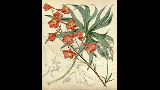 History at Home - Botanical Illustration